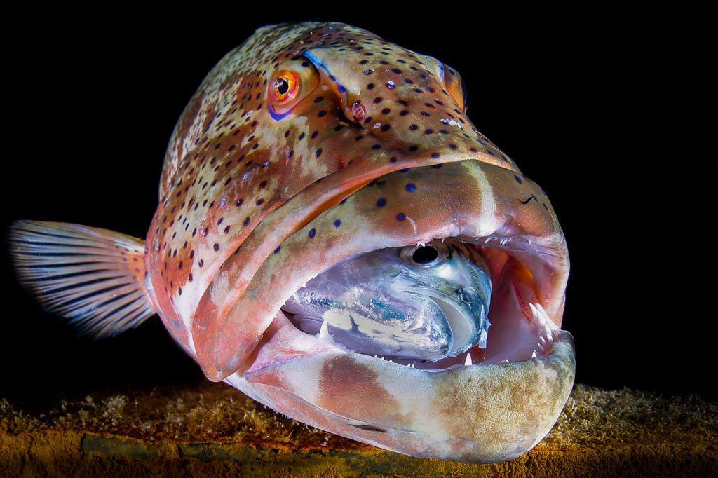Underwater Photo Marathon
