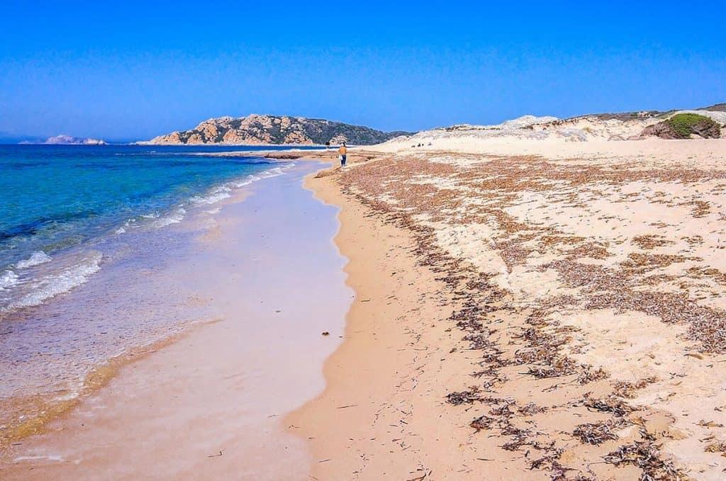 BeachRex, Lu Litarroni