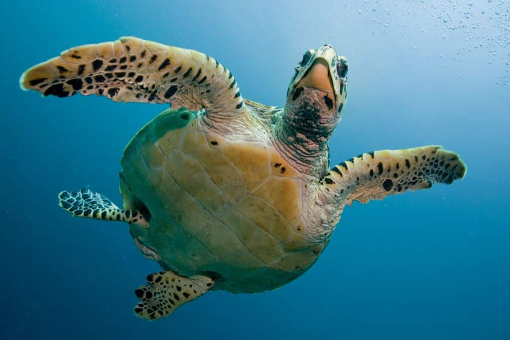 World Ocean Day Turtle 01