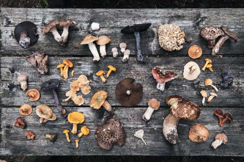 Ovo je fotografija AlpiNN Restoran Lokalne Namirnice Gljive