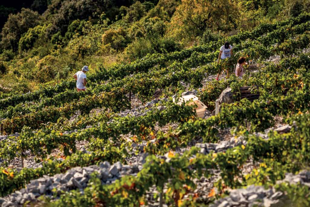 This is photo of a vineyard